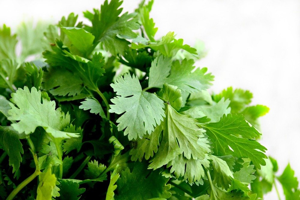 14 foods that are good for your skin - cilantro