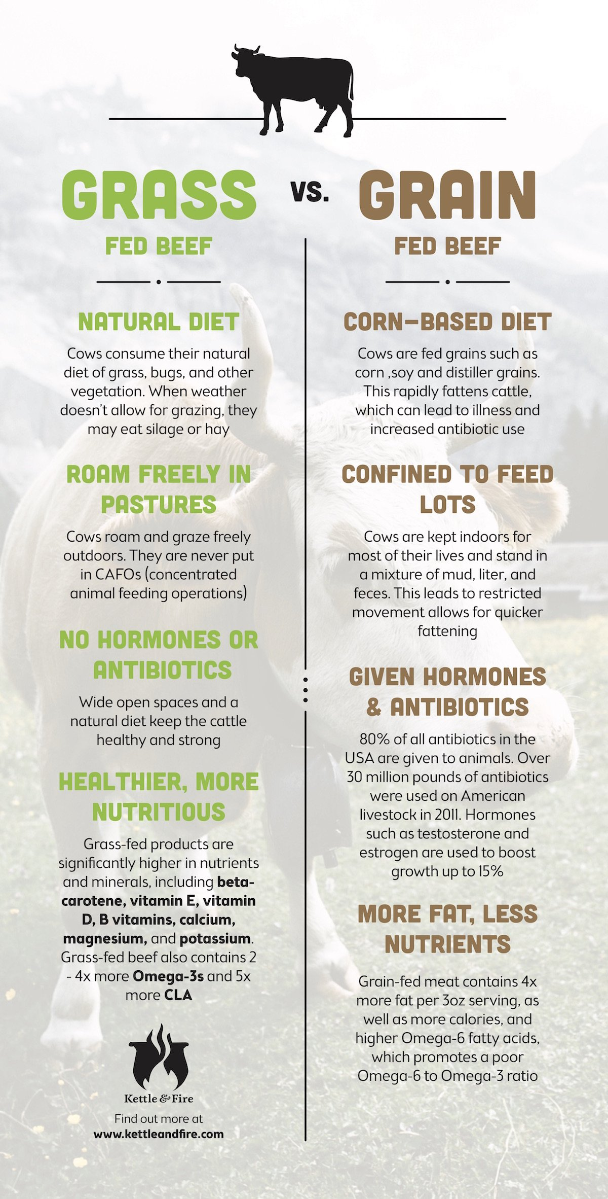 infographic showing The difference among grain-fed beef and grass-fed beef