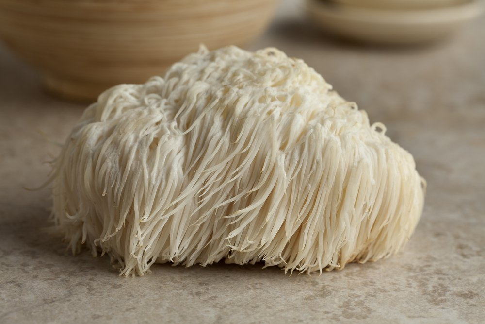 Single Lion's Mane Mushroom